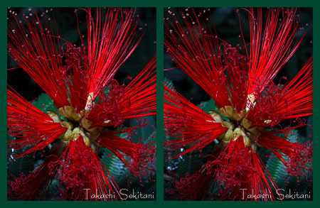 Redflower01_sp