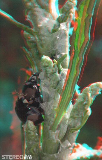 Ladybug_01_makinglove_350_ana_2