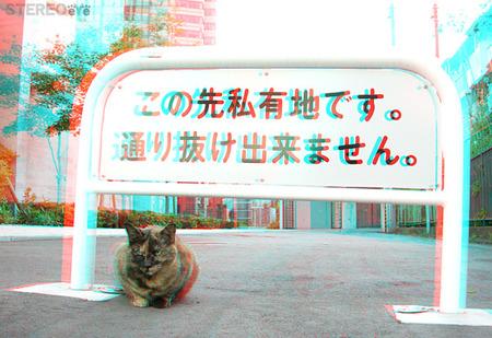 Cat_akasaka01_600_ana