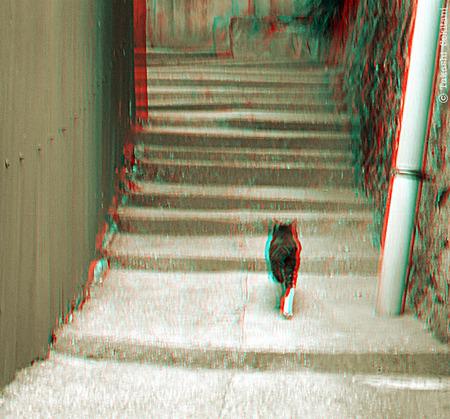 Onomichi_9d_cat_20101027_gnana_600