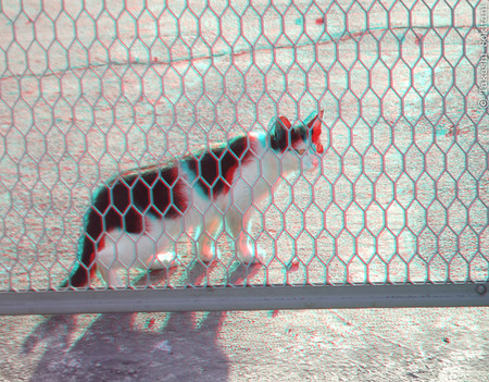 Cat_behind_fence_1_cana_600