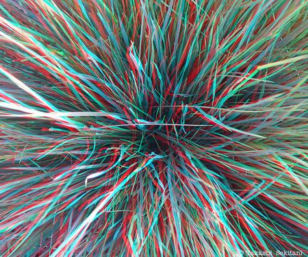 Grasslines_1_cana_600
