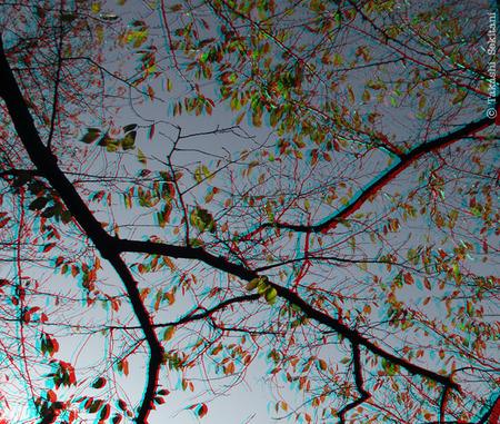 Autumntree_ookayama_2_csana_600