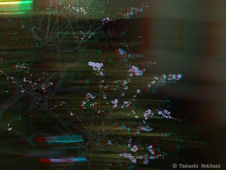 Umenight_2_cc_cana_600