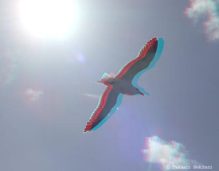 Floatingbird_cana_600