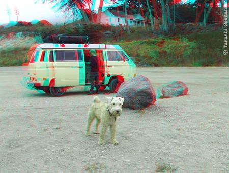 Dog_lososos_2_201207_cana_600