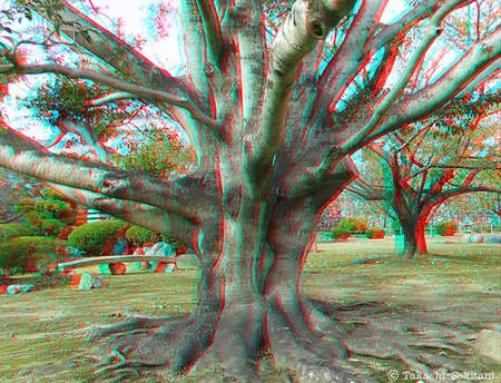 Trees_himeji_1_20121120_cana_600