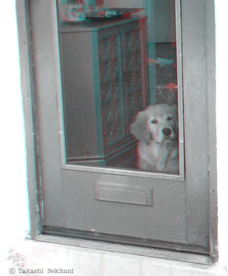 Dog_door_gana_600