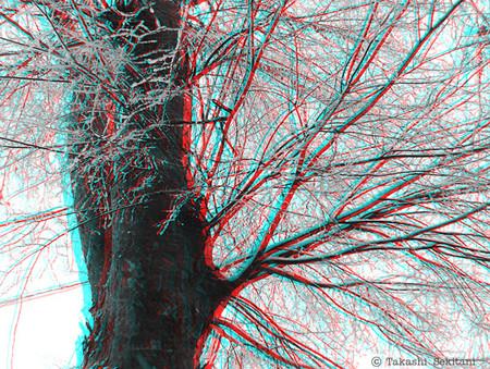 Tree_snow_1_gana_600