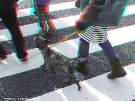 Dog_walking_cana_600