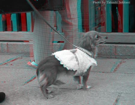 Dog_taisyakuten_2_gana_600