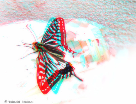 Swallowtail_cana_600