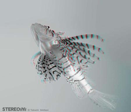 Flyingfish_kasago_01_gana_800