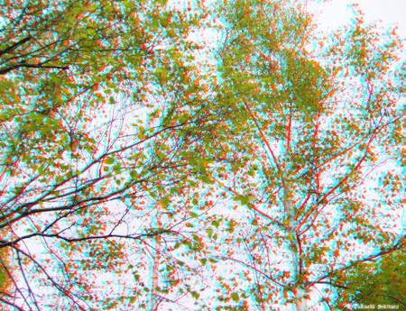 Autumntree_biei_01_cc_cana_1000