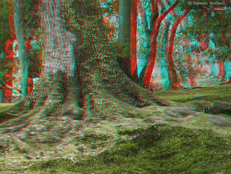Trees_forest_nara_1_cana_800