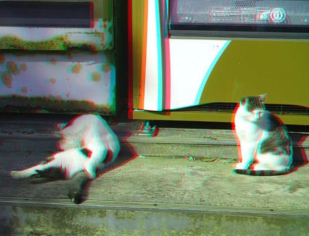 Cats_tashirojima_02_cana_800
