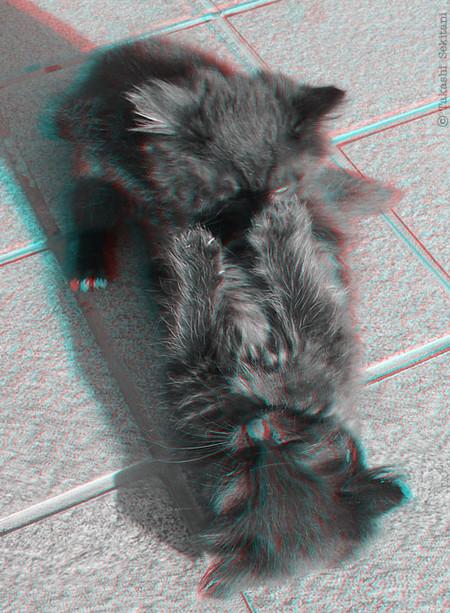Kitten_family_1_trim_gana_500_2