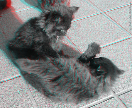 Kittyshow_3_trim_gana_800