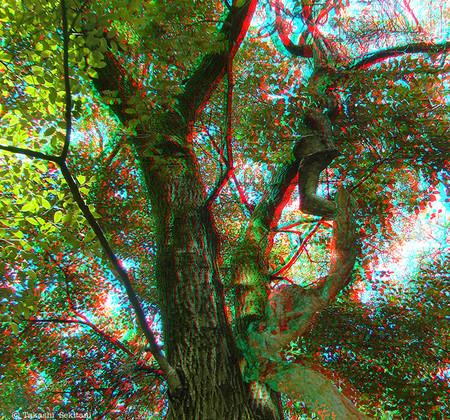 Nejineji_trees_1_cana_720_2