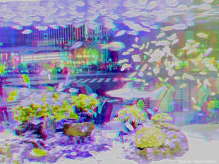 Aquarium_in_city_cana_960