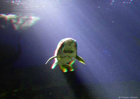 Shark_in_aquarium_cana_960