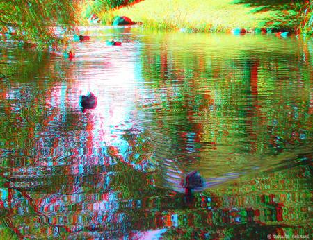 Duck_swiming_sapporo_02_cana_960
