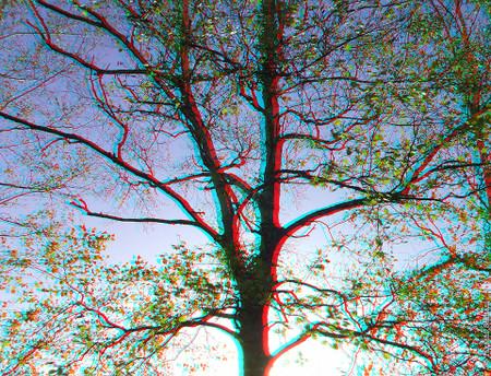 A_tree_akan_01_cana_960