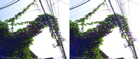 Flowers_electric_eater_01_sbs_960