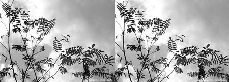 Treebranches_autumn_01_sbs_960