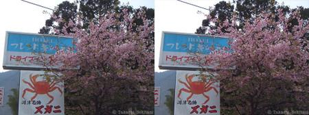 Kawazuskura_01_sbs_960