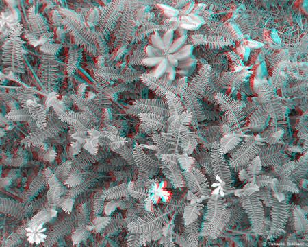 Plants_leaf_lososos_1_bw_gana_960