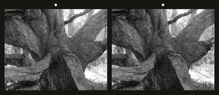 Tree_nose_1_bw_cross