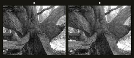 Tree_nose_1_bw_para