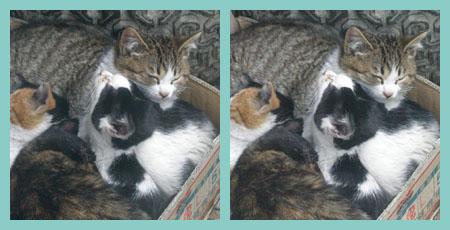 Cat_20080115_sp