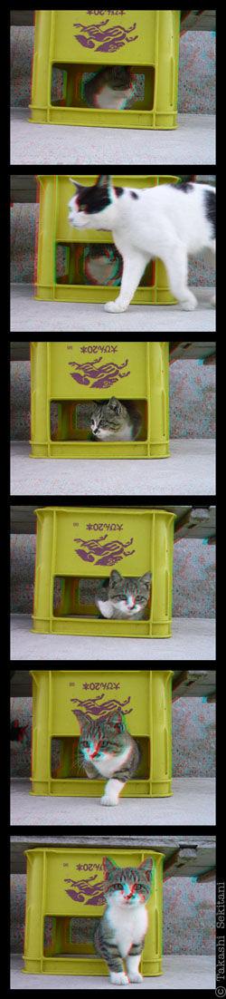 Kitty_in_box_10_con_cana_400